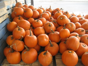 Pumpkins by Infrogmation New Orleans